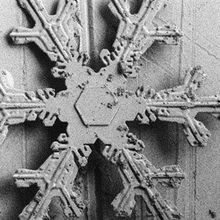 Image of the Day: Snowy Details