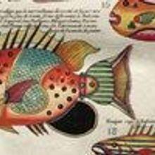 Fantastical Fish, circa 1719