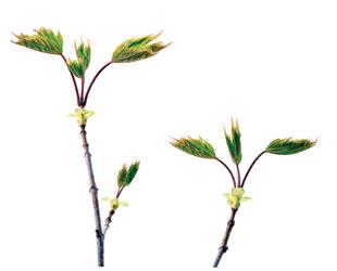 Plant Talk | The Scientist Magazine®