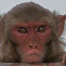 Harvard Fined for Animal Welfare Violations