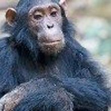 Chimp Retirement Bill Signed