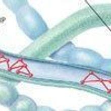 Bacterial Scaffolders