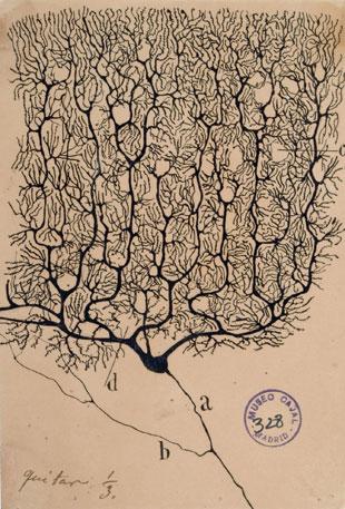 The Neuron Doctrine, circa 1894 | The Scientist Magazine®