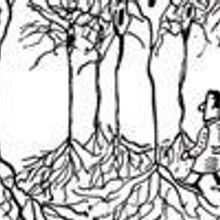 Exploring the Neuron Forest