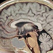 Genetic Diversity in the Brain