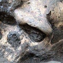 Ancient Georgian Ancestors