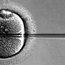 FDA Considers Three-Parent IVF