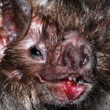 More Evidence MERS Came from Bats