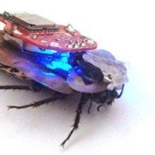 Controlling Cockroaches