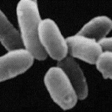 Bacteria Trade Genes
