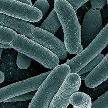 Obesity via Microbe Transplants