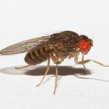 Fixing Fly Forgetfulness
