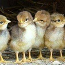 Unexpected Origin of an Avian Virus