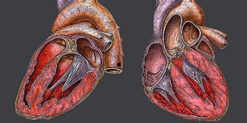 Framingham Heart Study - Full Text View - ClinicalTrials.gov