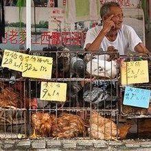 Multiple Bird Flu Threats Lurk