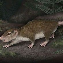 Ancient Mammalian Fossil Found