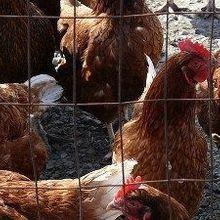 Bird Flu Spreads Between People
