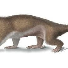 Fossils Snarl Mammalian Roots