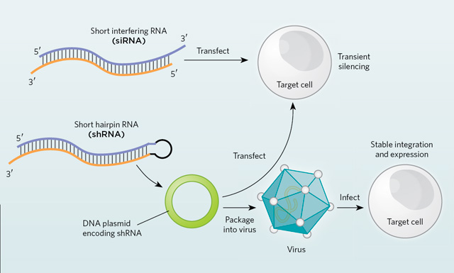 how to work with rna