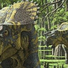 A Big-Nosed Horn-Faced Dino