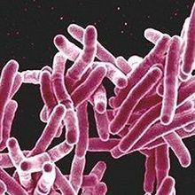 Bacterial Gene Transfer Gets Sexier