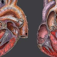 Stem-Cell Heart Repair Questioned