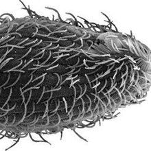 Image of the Day: <em>E. coli</em> Hunter
