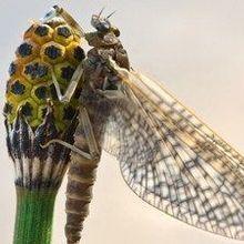 Pesticides Decimate Biodiversity