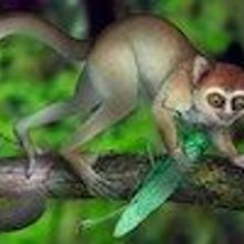 Fossil Sheds Light on Early Primates