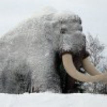 Mammoth Blood Gives Hope for Cloning?