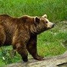 Birdwatcher Fights Off Bear