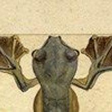 Flying Frog, 1855