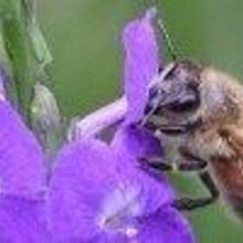 Europe to Ban Neonicotinoids