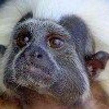 Harvard to Close Primate Center