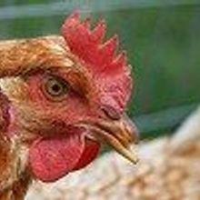 Characterizing H7N9