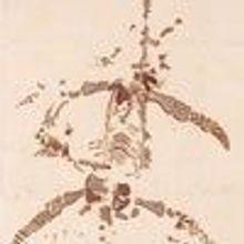 A Sea Dragon Revealed, 1823