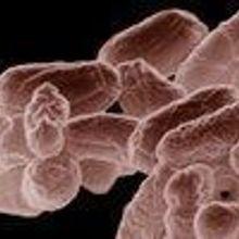 Bacteria Boost Vaccine Effectiveness