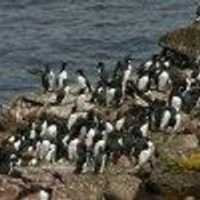 Oil Additive Harming Seabirds