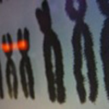 """Social"" Chromosome Discovered"