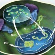 The Plastid Gene Shuffle