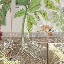 The Soil Microbiome