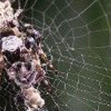 Spider Sculpts Fake Spider