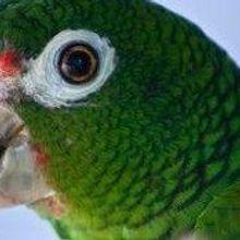 Puerto Rico's Native Bird