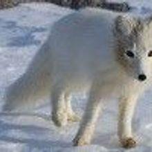 Arctic's Menacing Melt