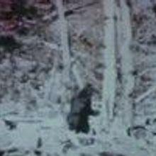 Suspect Sasquatch Sequencing