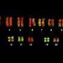 Preventing Genetic Identity Theft