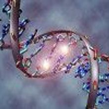 Half-Life of DNA Revealed
