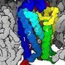 G-Protein Receptor Work Wins Nobel