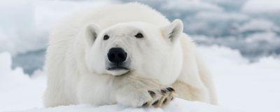 The Polar Bear's Prehistoric Past