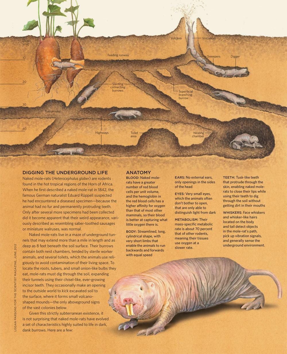 Digging The Underground Life The Scientist Magazine